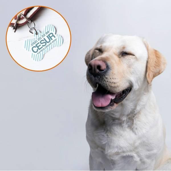 İsim ve Telefon Numaralı Köpek Künyesi
