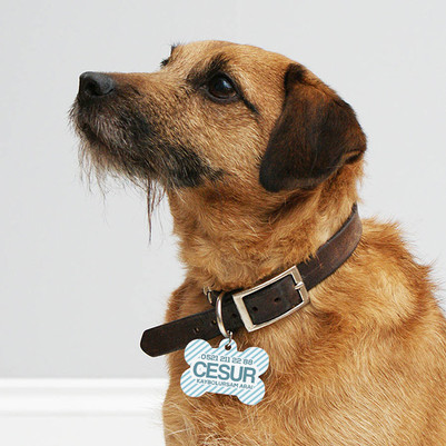 İsim ve Telefon Numaralı Köpek Künyesi - Thumbnail