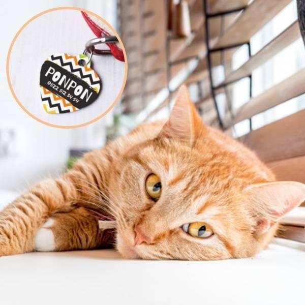 Kaybolursam Ara Kedi Künyesi