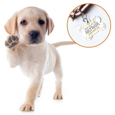 - Kaybolursam Ara Sevimli Köpek İsimliği
