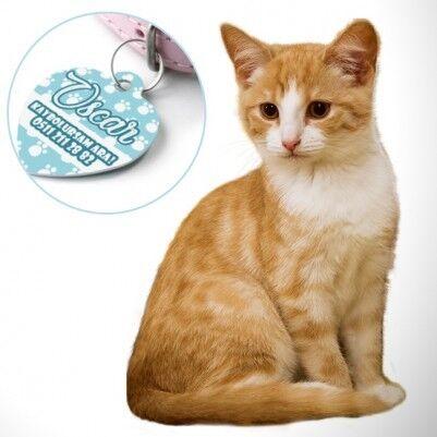 Kaybolursam Ara Telefonlu Kedi İsimliği - Thumbnail