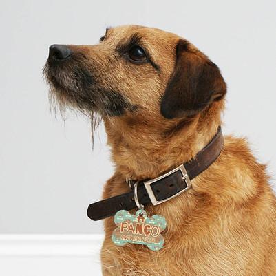 Kemik Şeklinde İsimli Köpek İsimliği - Thumbnail
