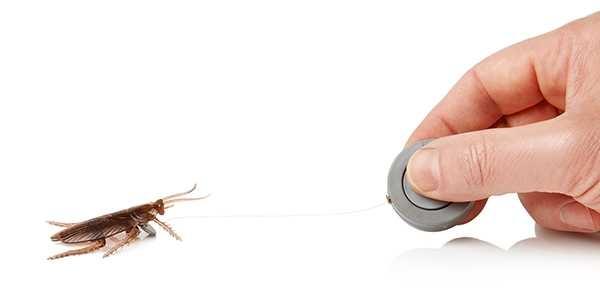 Koşan Hamam Böceği Şakası