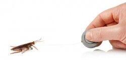 Koşan Hamam Böceği Şakası - Thumbnail
