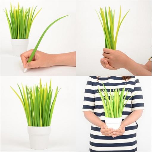 Pen Grass - Çim Kalem